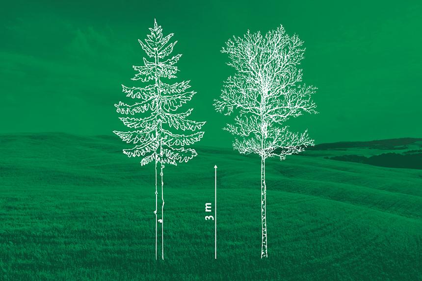 Kasvavate puude laasimine. Virumaa Metsaühistu